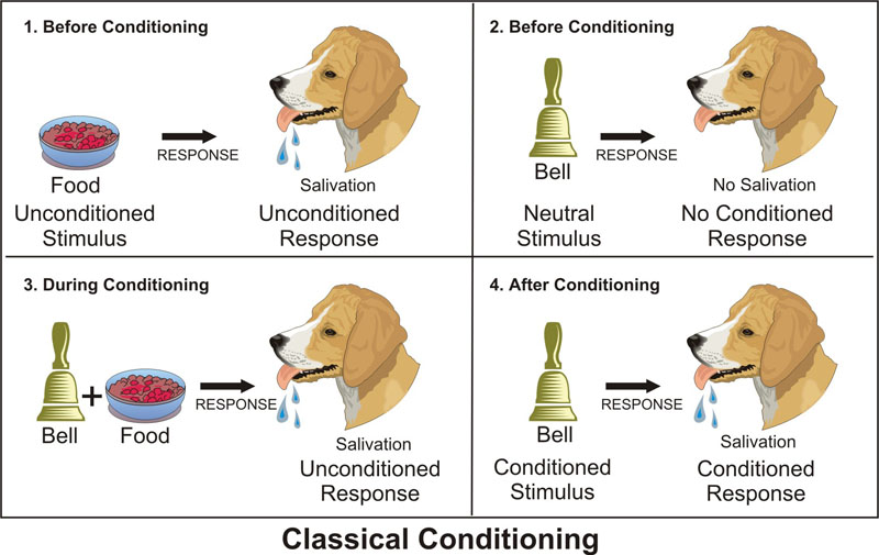 classical conditioning 1903 - ivan pavlov discovers classical conditioning theory check the instructional design models and theories: classical conditioning to find more.